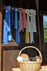 During the 2011 season, three yearlings brought home three firsts and a second in two shows!