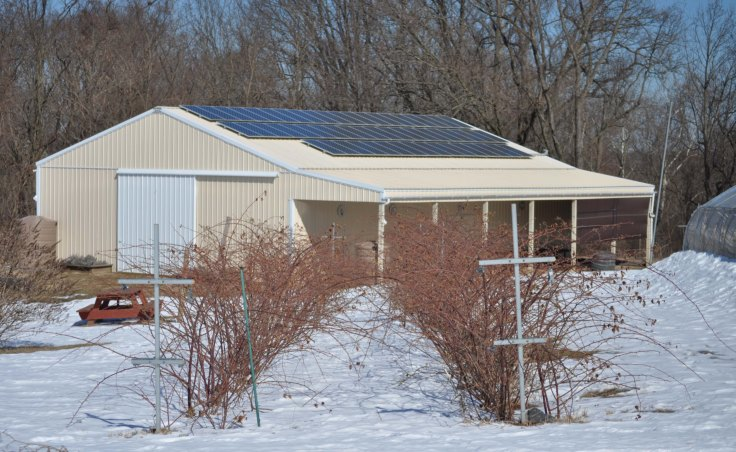 Blackberry Patch located in front of the barn where produces is picked up. Solar panels power the well and other functions of the barn.