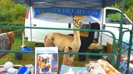 Trotter Hill Alpacas